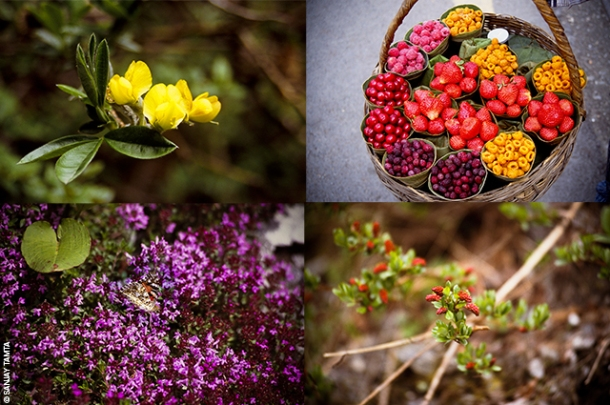 Valley-of-Flowers_640W©